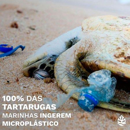 Pesquisa verifica presença de microplástico em todas as tartarugas analisadas